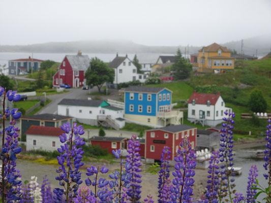 Urlaub in Neufundland: Farbenfrohe Häuser in der Ortschaft Trinity.