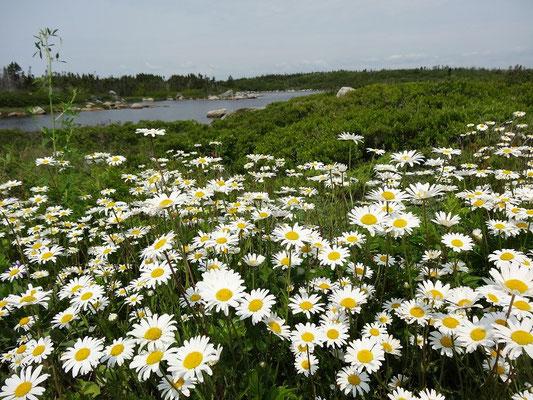 Tundra Impressionen aus Nova Scotia.