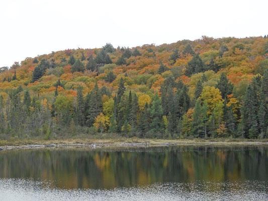 Noch ein Uferblick aus dem Algonquin Provincial Park: Hier sind die vorwiegenden Fall Colors Gelb und Orange.