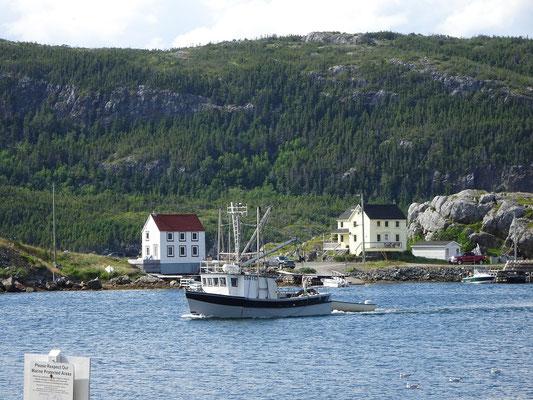 Urlaub in Neufundland: Fischerboot im Hafen von Salvage.