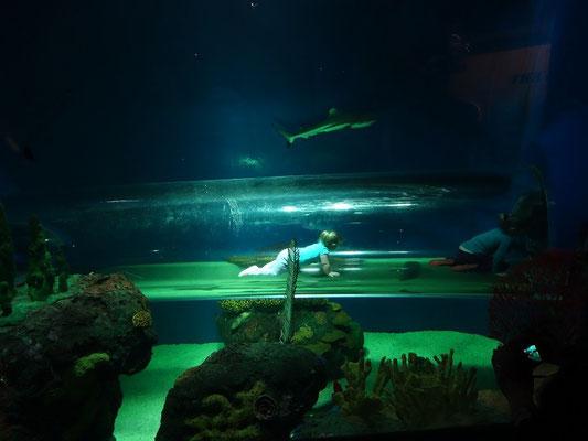 Hier krabbeln Kinder durch ein Haifisch-Becken im Ripley's Aquarium of Canada.