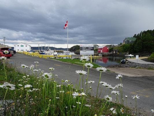 Urlaub in Neufundland: Blick auf den Hafen von Happy Adventure,