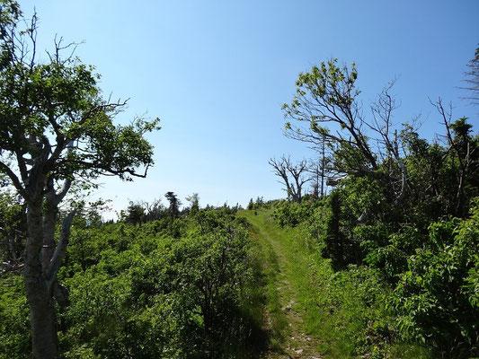 Hier gewinnen wir weitere Höhenmeter beim Wandern im Cape Breton Highlands National Park.
