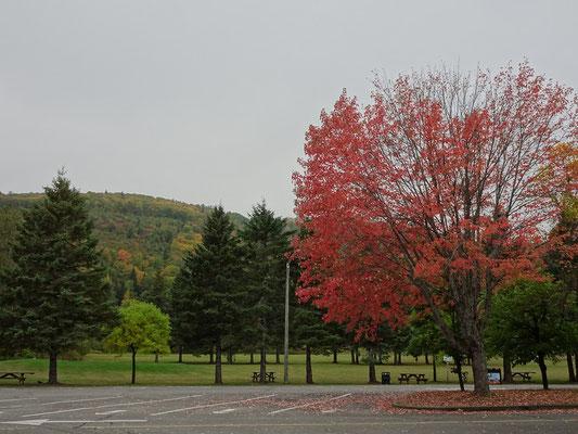 Urlaub in New Brunswick: Auf der Suche nach den herbstlichen Fall Colors.  Während einige Bäume schon ihre Blätter abwerfen, hat bei anderen die Färbung noch gar nicht begonnen.