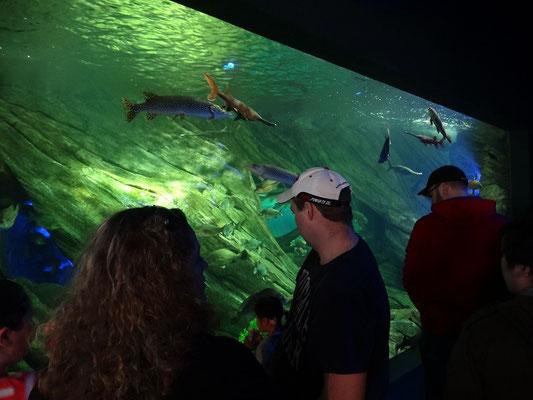 Ripley's Aquarium of Canada: Mit einheimischen Fischarten beginnt der Rundgang.