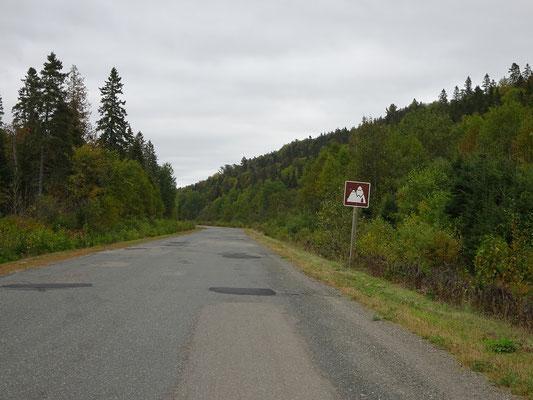 Urlaub in New Brunswick: Wald und Hügel an der Appalachian Range Route. Das kleine, braune Schild kennzeichnet die Route.