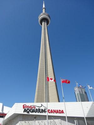 Zwei Attraktionen in einem Bild: Ripley's Aquarium of Canada steht direkt neben Torontos CN Tower.