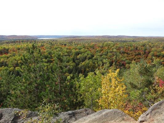 Endlose Wälder in Ontarios Algonquin Provincial Park, hier während der Fall Colors 2015.