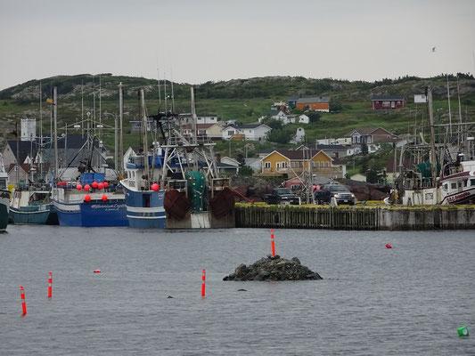 Blick auf Fischerboote in Twillingate.