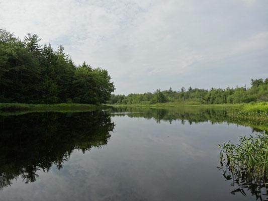 Paddeln und Wandern in Nova Scotia: Flussaue im Kejimkujik National Park