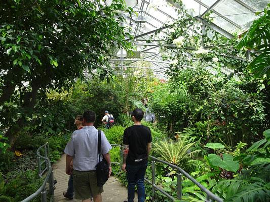Besuch im Allan Gardens Conservatory in Toronto.
