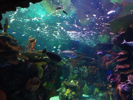 Buntes Treiben im Ripley's Aquarium of Canada