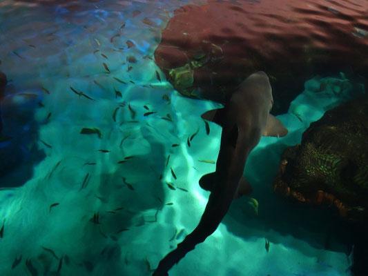 Mit den Haien macht das Ripley's Aquarium ordentlich Werbung in Toronto.