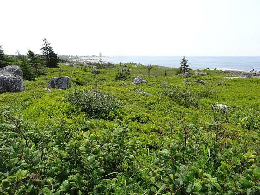 Am Horizont steht der Leuchtturm von Peggy's Cove.