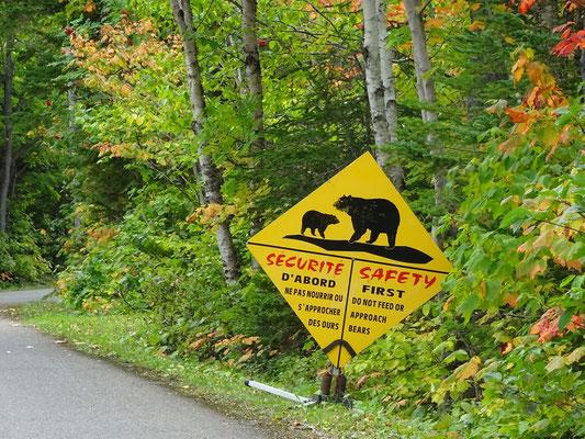 Urlaub in Quebec: Dieses Schild im Forillon Nationalpark warnt vor Schwarzbären, die wegen der dichten Vegetation unverhofft auf die Strasse tapsen könnten.