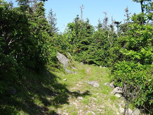 Auf dem Acadian Trail im Cape Breton Highlands National Park: Dank des dichten Bewuchses können sich Tiere gut verstecken. Darunter auch solche, denen man nicht nicht unbedingt direkt gegenüber stehen möchte ;-)