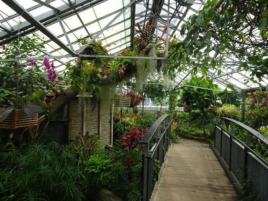 Eindrücke aus dem Allan Gardens Conservatory in Toronto.