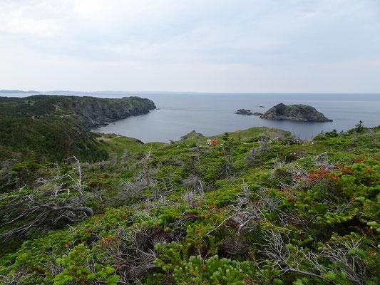 Urlaub in Neufundland: Wanderwege laden zum Erkunden der Steilküste nahe Twillingate ein.