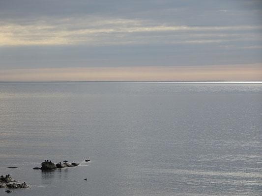 Urlaub in Quebec: Meer, Felsen und Vögel nahe Cap-des-Rosiers auf der Ostseite des Forillon Nationalparks.