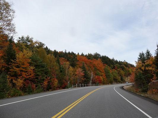 Und noch ein Bild von bunten Bäumen im Algonquin Provincial Park: Der Highway 60 in Fall Colors.