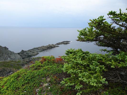 Urlaub in Neufundland: Sommer an der Steilküste nahe Twillingate.