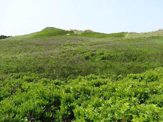 Dünen im Prince Edward Island National Park.
