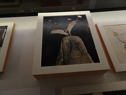 """Nuit Blanche 2016 in Toronto: Seltene Tiere bei der """"Academy of the Suspicious"""""""