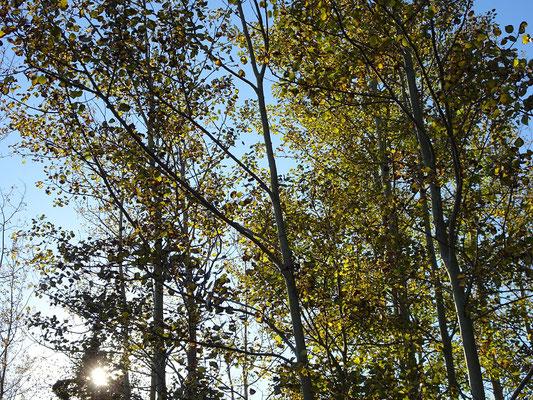 Urlaub in Quebec: Bäume im Westen des Forillon Nationalparks.