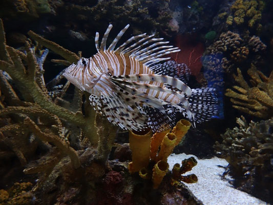 Exotisches im Ripley's Aquarium Toronto.