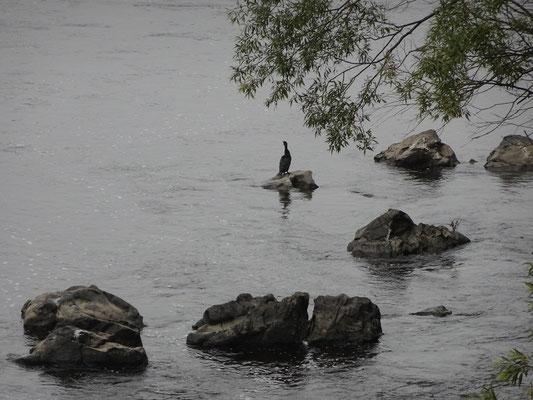 Urlaub in Quebec: Szene am Riviére-du-Loup.