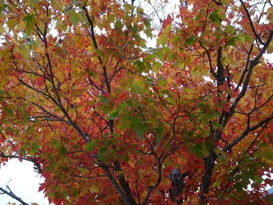 Urlaub in New Brunswick: Herbstliche Farben.