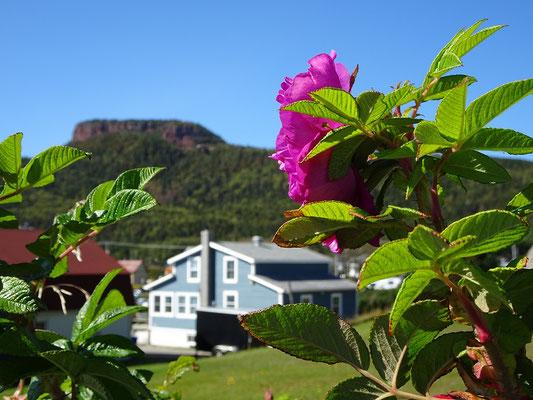 Urlaub in Quebec: Bild mit Berg und Blüten aus Percé.