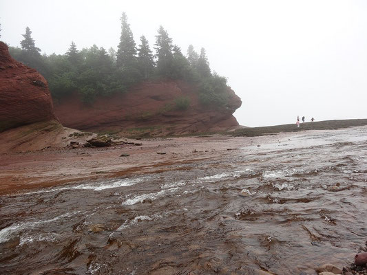 Strandwanderung bei Ebbe an der Bay of Fundy in New Brunswick.