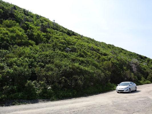 Weiterer kurzer Fotostopp auf dem Cabot Trail im Cape Breton Highlands National Park.