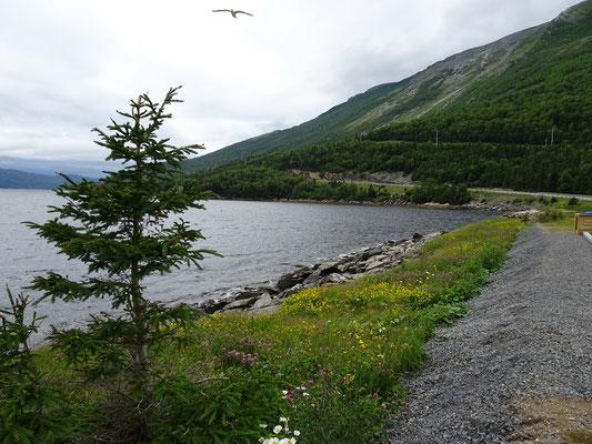 Auf dem Weg durch den Gros Morne Nationalpark schlängelt sich die Strasse oft am Wasser entlang.