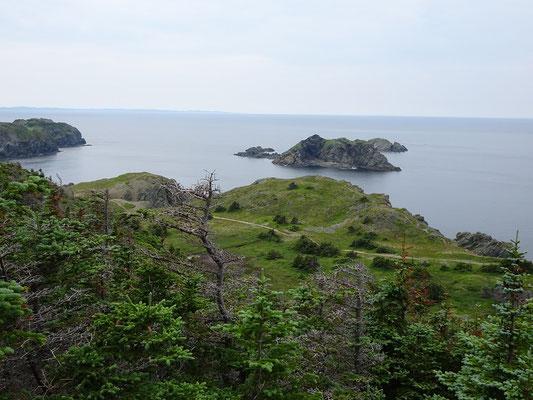 Urlaub in Neufundland: Blick aufs Meer beim Wandern an der Steilküste nahe Twillingate.