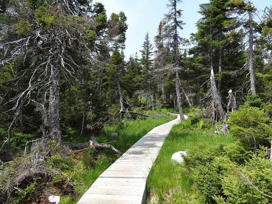 Dieser Boardwalk im Cape Breton Highlands National Park führt zu einem kleinen See.
