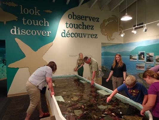 Im Besucherzentrum des Terra Nova Nationalparks können grosse und kleine Naturforscher auf Tuchfühlung mit der heimischen Unterwasserwelt gehen.