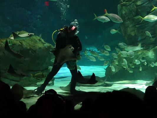 Vorführung im Ripley's Aquarium Toronto.
