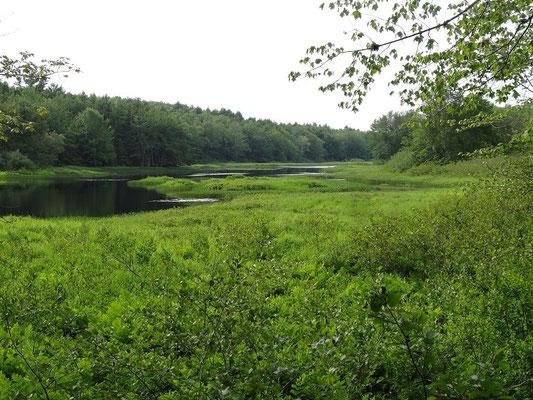 Die Flusslandschaft im Kejimkujik National Park in Nova Scotia kann der Besucher durchwandern oder im Kajak erkunden.