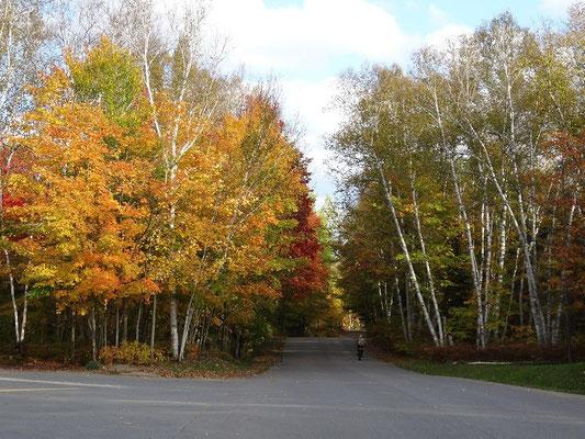 Mit dem Fahrrad durch den herbstlichen Arrowhead Provincial Park während der Fall Colors.