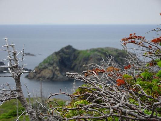 Urlaub in Neufundland: Wandern an der Steilküste nahe Twillingate.