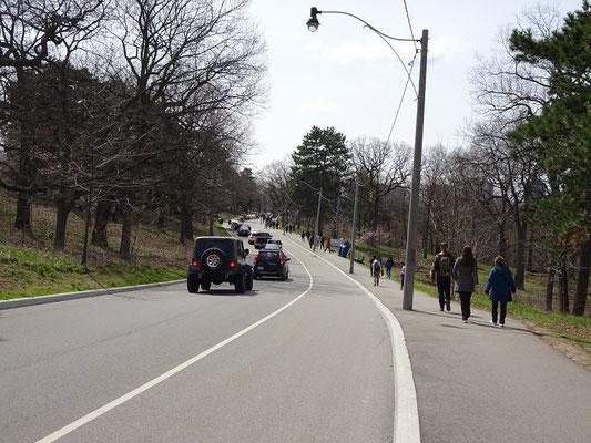 Besucher auf dem Weg zu den Kirschbäumen in High Park.