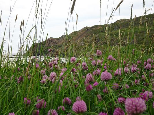 Urlaub in Neufundland: Sommer in Twillingate.