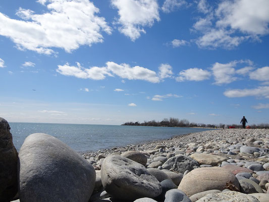Besuch am Lake Ontario: Spaziergang am Woodbine Beach.