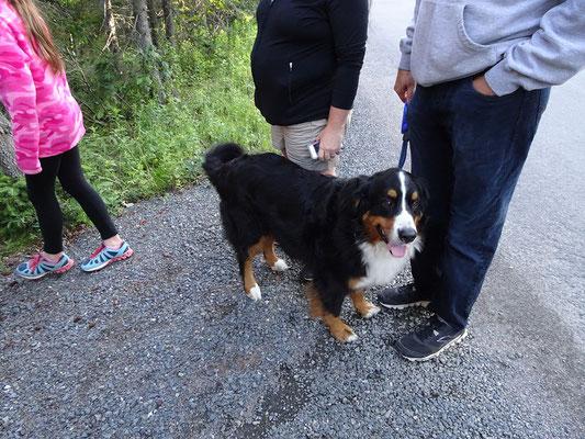 Wandern im Terra Nova Nationalpark: An diesem wohlerzogenen Vierbeiner lag es nicht, dass sich die Biberfamilie nicht zeigte.