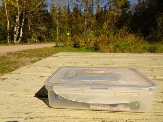 Geocaching in Quebec: Inspektion des Fundes im Parc national de la Gaspésie.