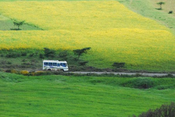 Gimbi liegt ca. 450 Kilometer von der Hauptstadt Addis Abeba entfernt. Mit dem Auto heißt das einen Tag. Mit dem Bus dauert es zwei.