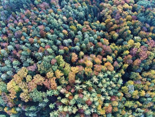 2019: Traritrara der Herbst ist da. Drohnenaufnahme