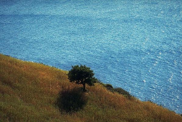1997: Baum vor Meer auf Kreta